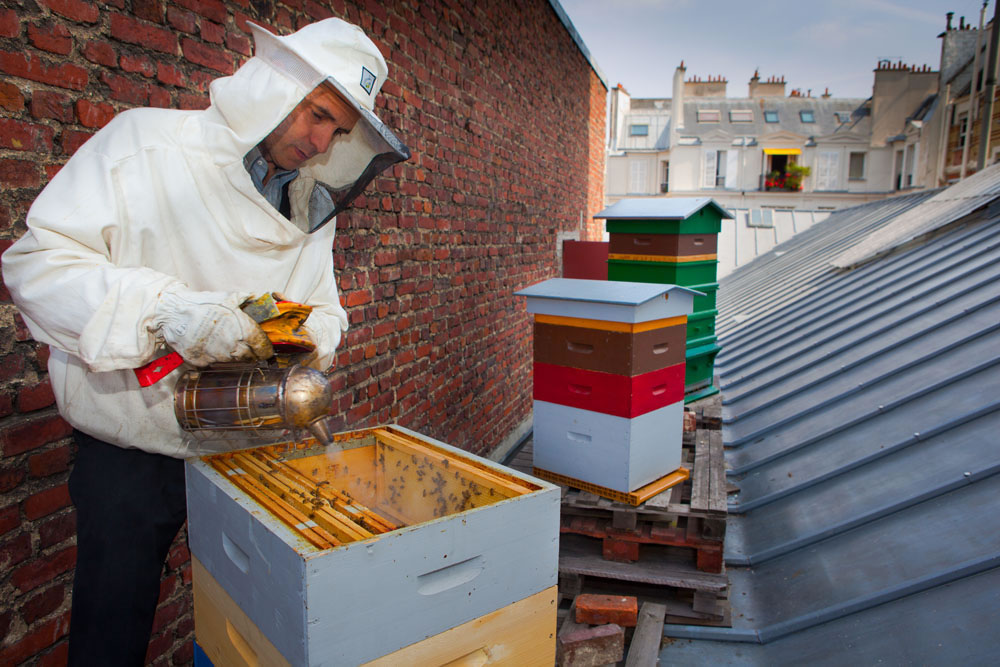 devenez apiculteur urbain